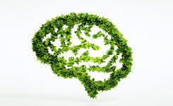 S'inspirer de la permaculture pour faire fructifier son entreprise
